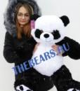 80 панда